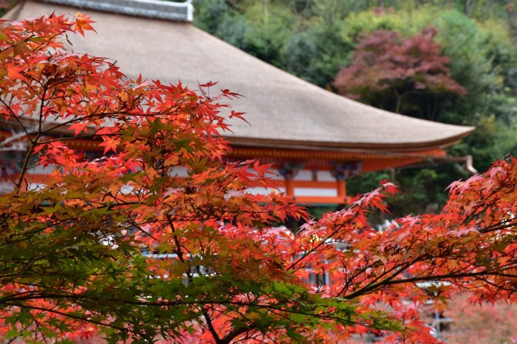 Best Of Japan: The Perfect 2-Week Itinerary For First-Timers