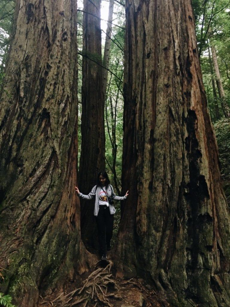 Stinson Beach Mount Tamalpais - Travels With Elle