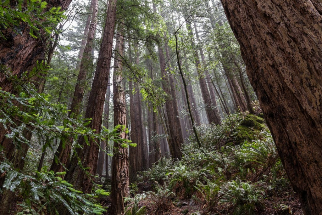 Muir woods - travelswithelle
