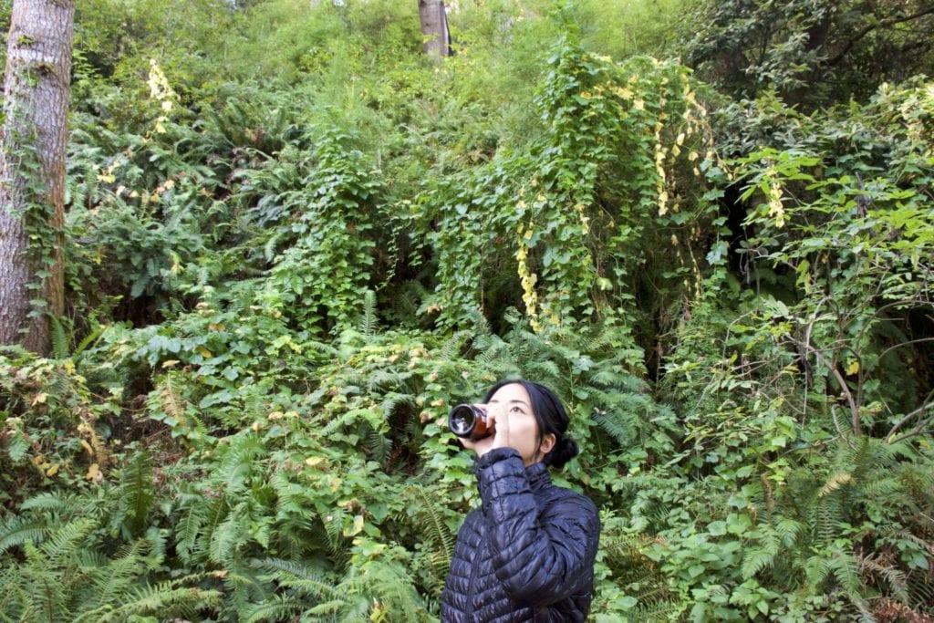 San Francisco to Mendocino Road Trip: San Francisco to Mendocino - Van Damme State Park