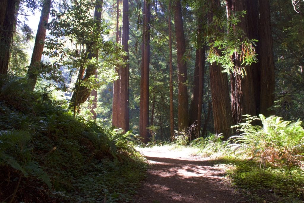Mendocino to Redwood National Park Road Trip - Avenue of The Giants