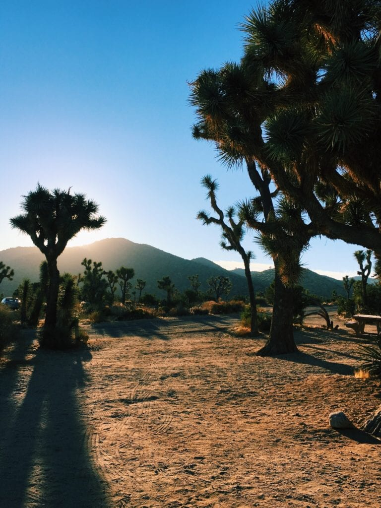 Joshua Tree National Park - Travels With Elle