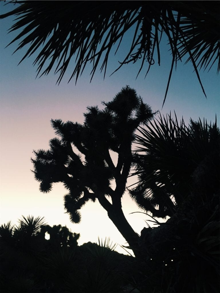 Joshua Tree Sunset - Travels With Elle