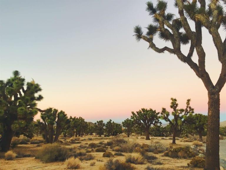 Joshua Tree Sunset - Travels With Elle
