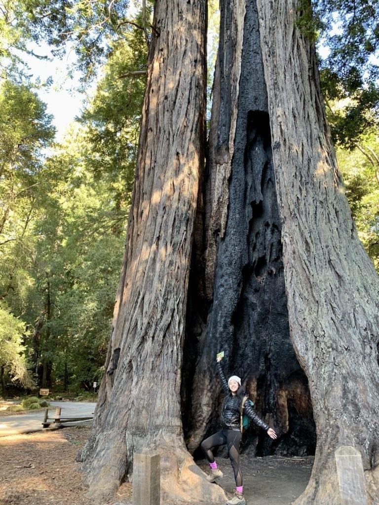 Big Basin Redwoods State Park - Travels With Elle