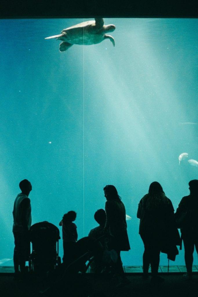 Monterey Bay Aquarium - Travels With Elle
