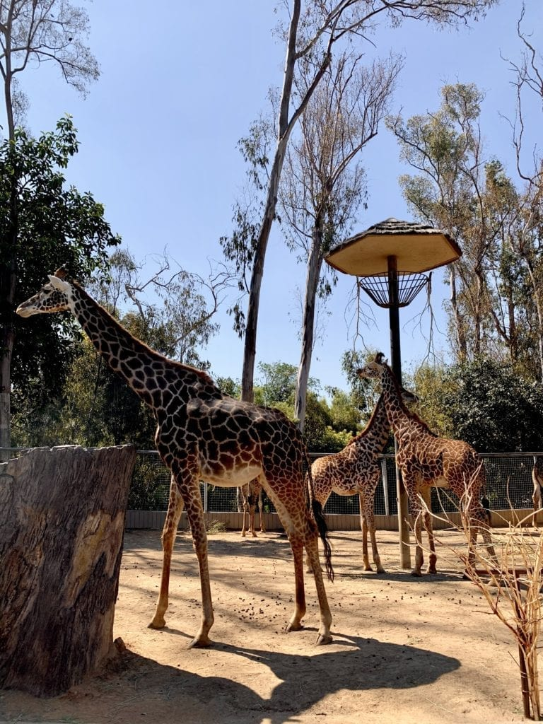 18 Exciting Things To Do In Downtown San Diego - San Diego Zoo - Travels With Elle