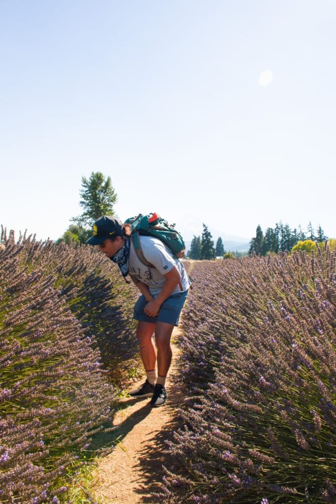 Lavender Valley Lavender Farm, Oregon - Travels With Elle