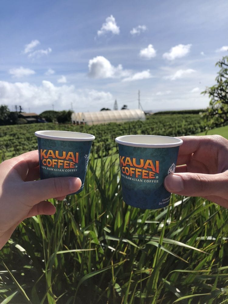 Kauai Coffee Company Free Tour