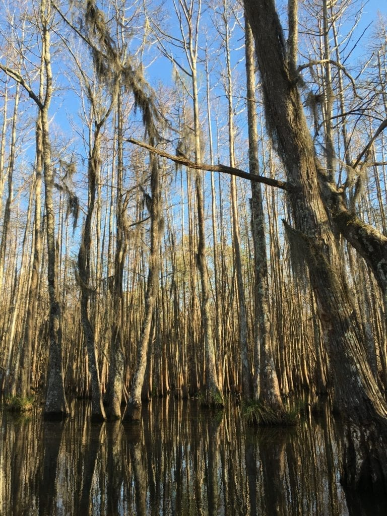 Honey Island Swamp Tour -Free and Affordable Things to Do In New Orleans - Travels With Elle