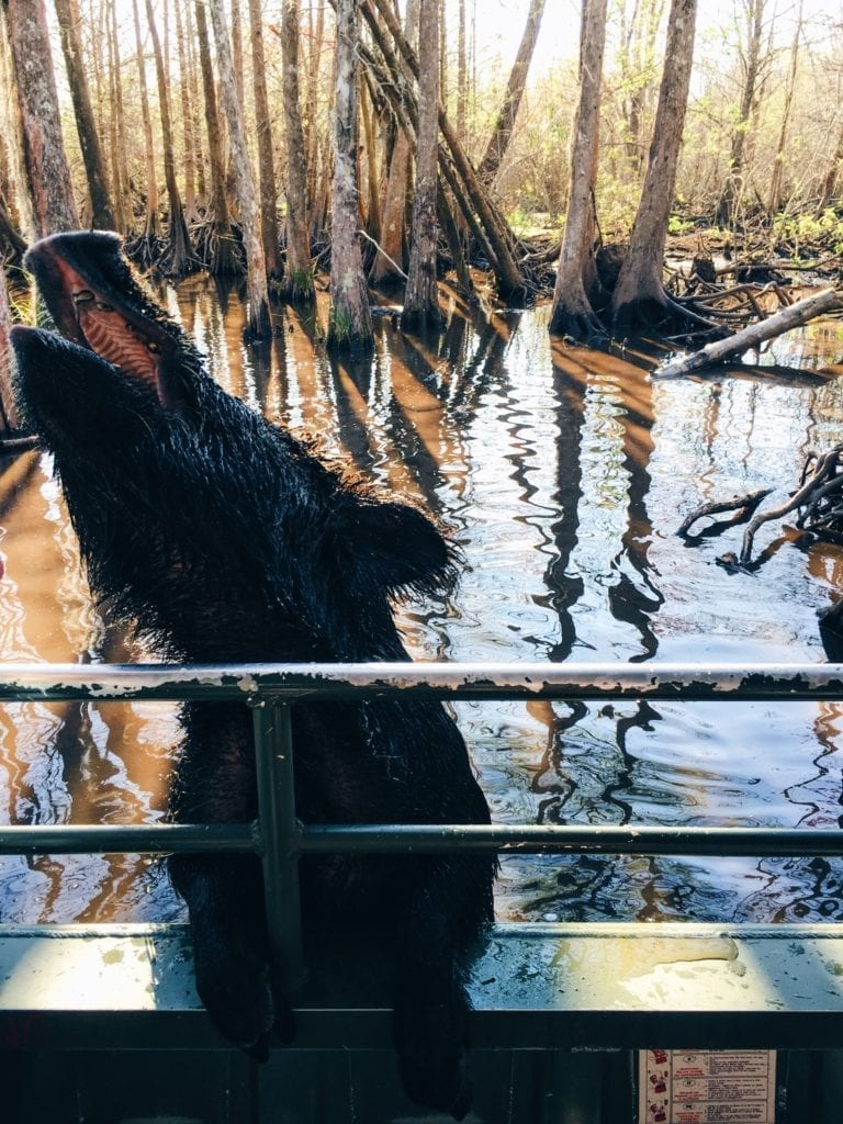 Honey Island Swamp Tour - Travels With Elle