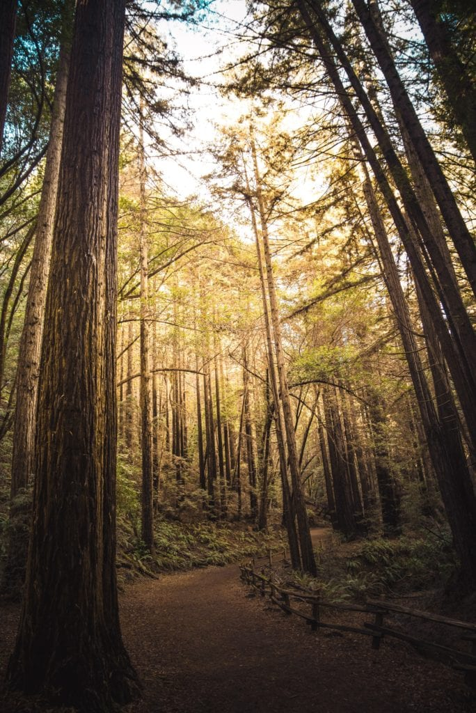 Redwood Regional Park - Best Things To Do In Oakland CA - Travels With Elle