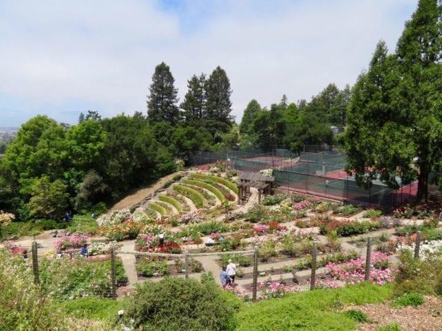 Berkeley Rose Garden - Best Things To Do In Berkeley CA - Travels With Elle