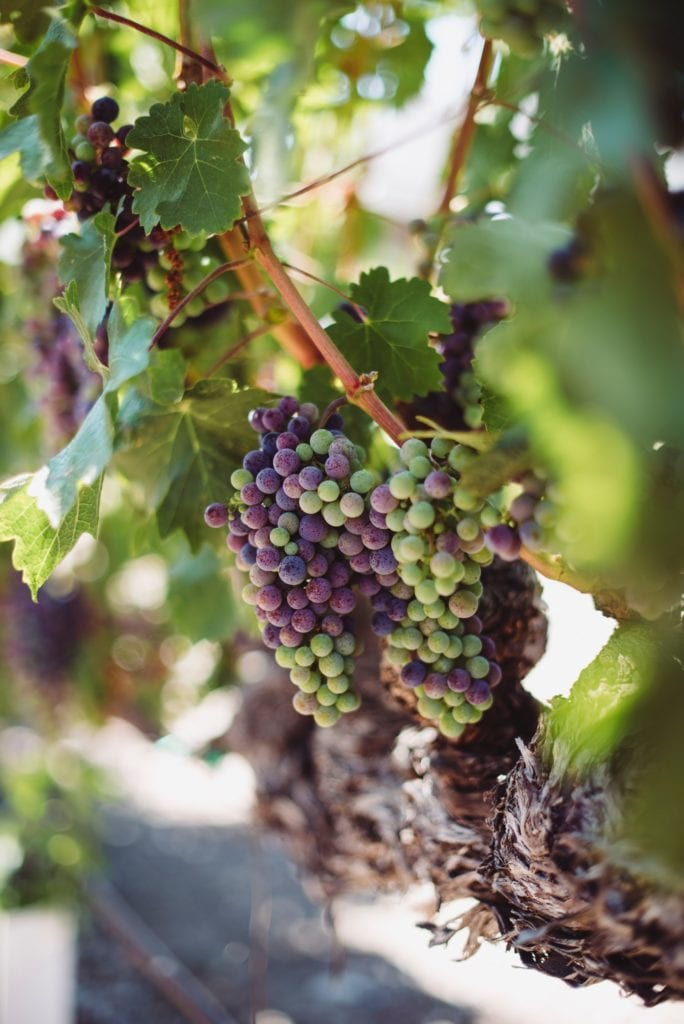 Best Time To Go To Napa California - Best Things To Do In Napa Valley Besides Wine - Travels With Elle