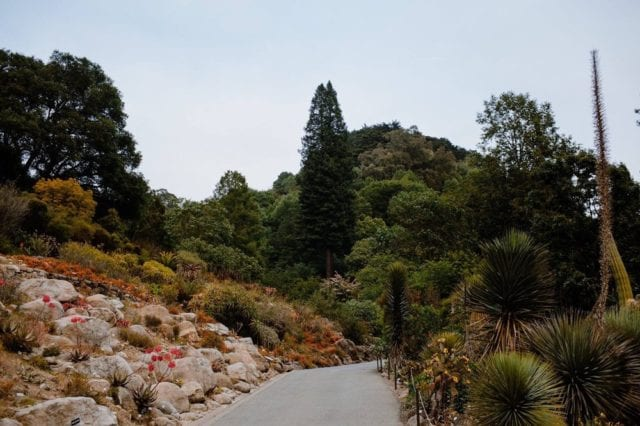 UC Botanical Garden - Best Things To Do In Berkeley CA - Travels With Elle