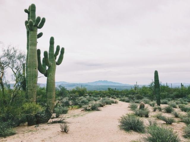 Desert Botanical Garden Phoenix - Arizona Road Trip - The Perfect 4 Day Itinerary