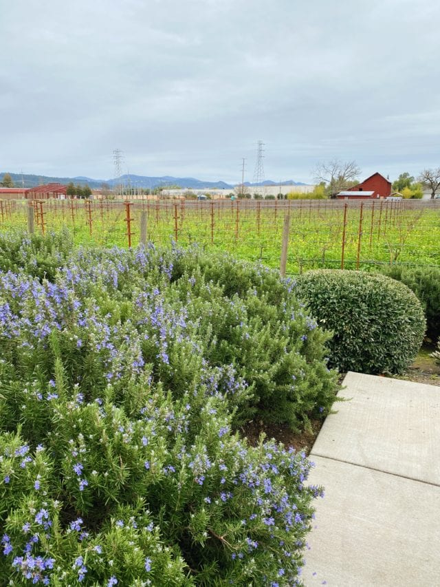 Napa Valley Outdoors - Best Things To Do In Napa Valley - TravelsWithElle