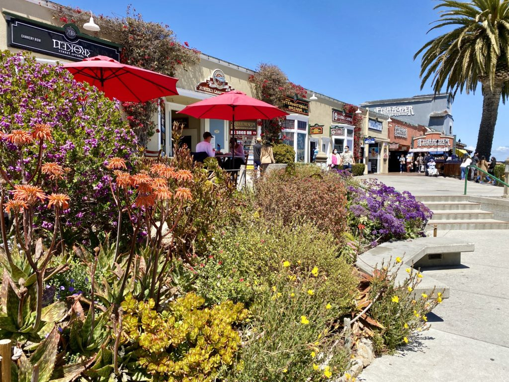 Best Time To Visit Monterey Bay CA - Travels With Elle