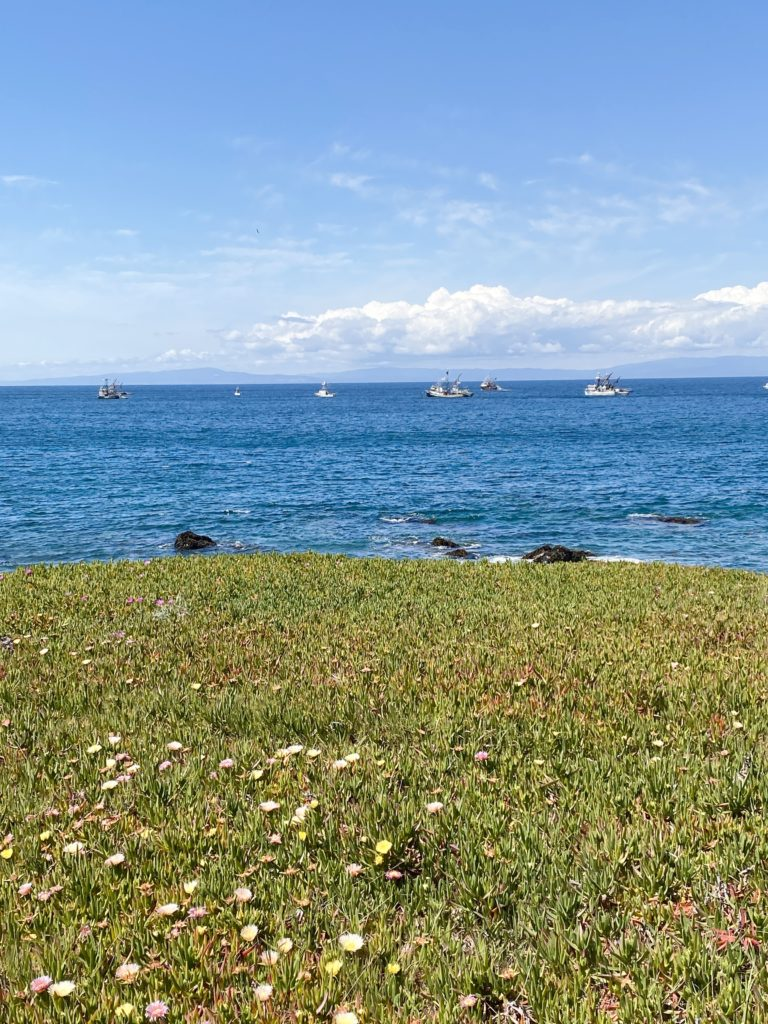 Coastal Recreational Trail - 32+ Exciting Things To Do In Monterey CA - TravelsWithElle