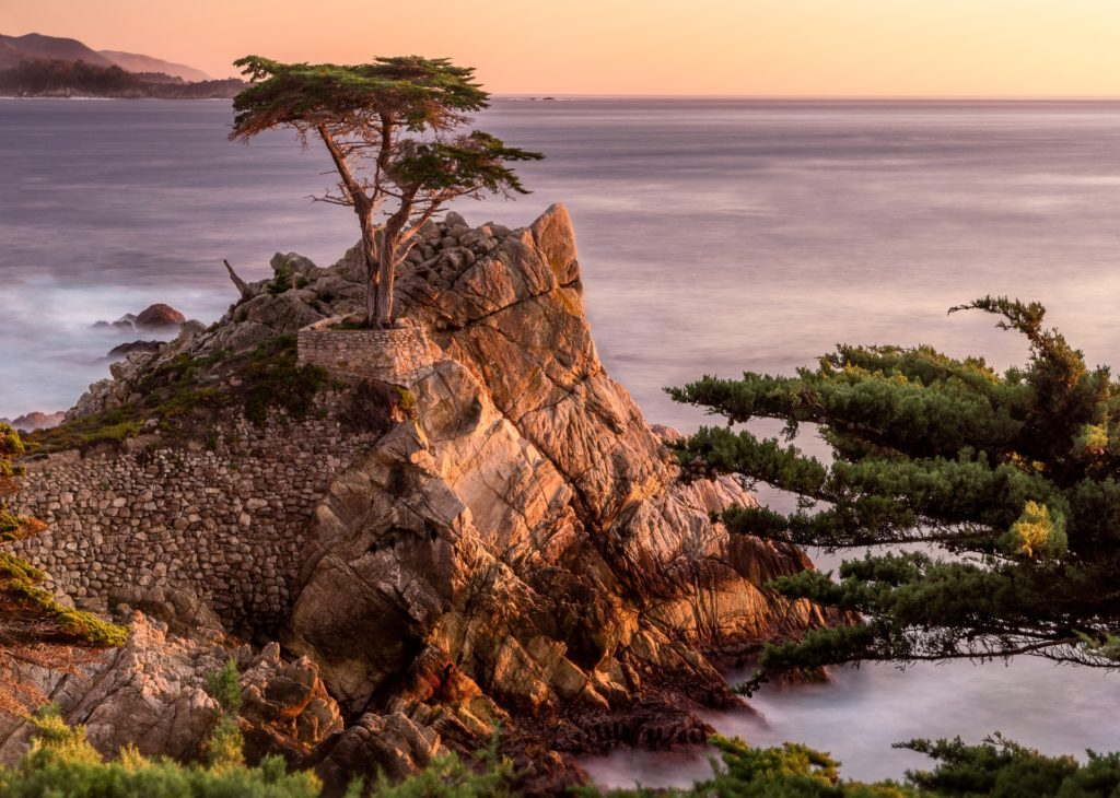lone cypress 17 mile drive - Best Things To Do Monterey CA - TravelsWithElle