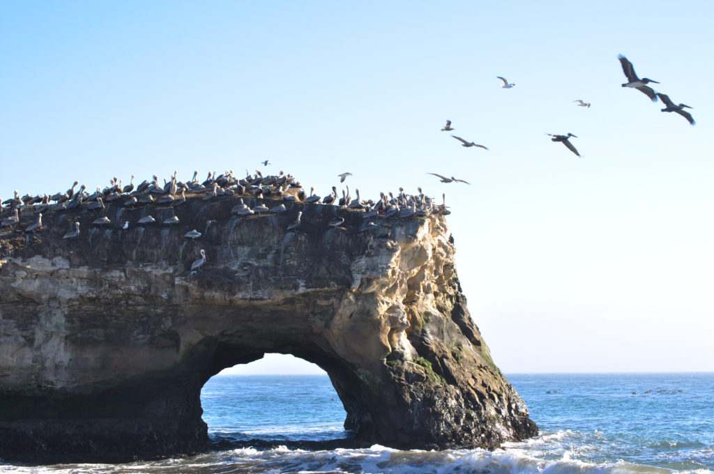 Natural Bridges State Park Monarch Grove - Best Things To Do In Santa Cruz, CA - TravelsWithElle