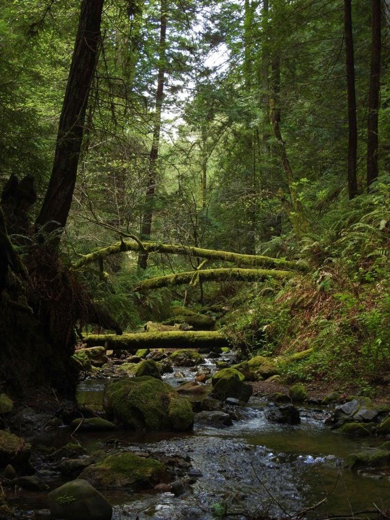 Purisima Redwood Preserve - San Francisco To Santa Cruz Road