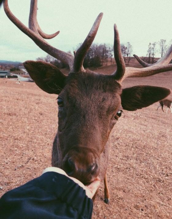 Virginia Safari Park - Best Wildlife Safaris in the USA - TravelsWithElle