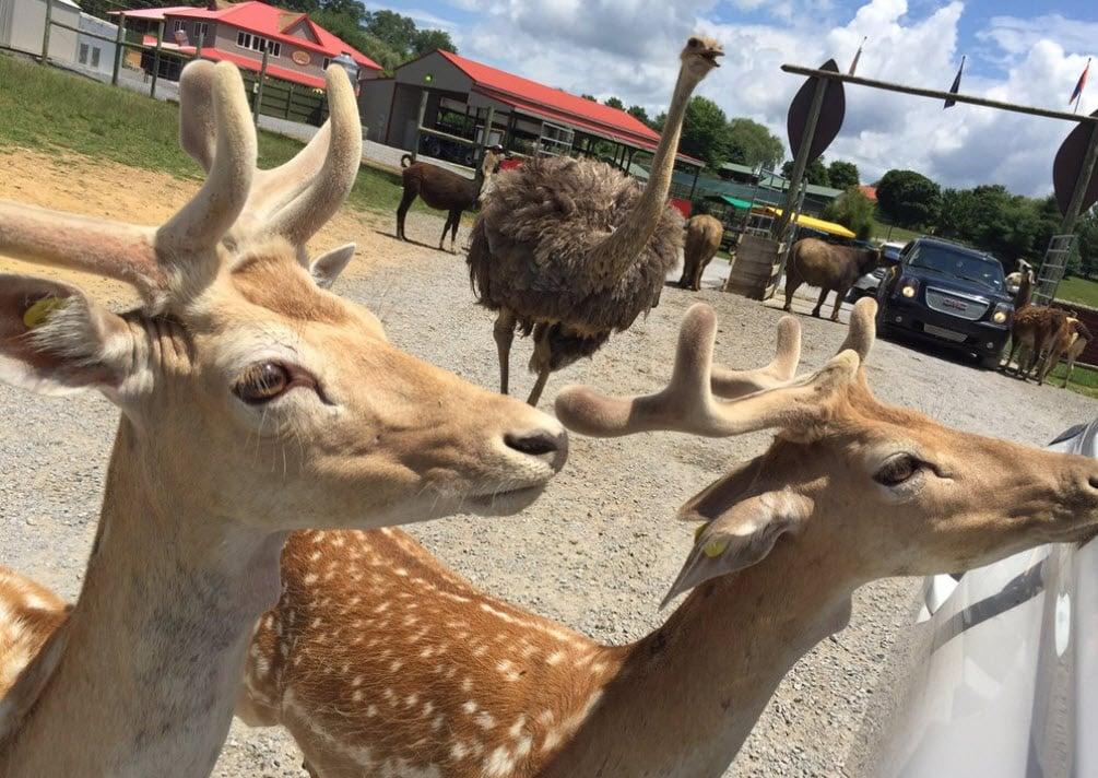 Virginia Safari Park - Best Wildlife Safaris in the USA