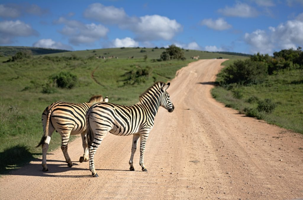 12 Best Safaris In The USA - TravelsWithElle
