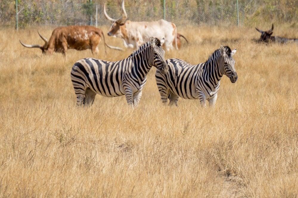 wildlife safari oregon - best safaris in the USA