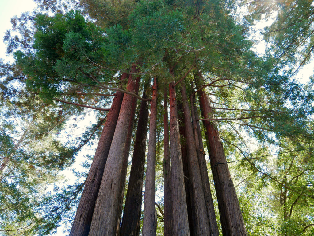 Armstrong Redwoods State Reserve - Best Things To Do Sonoma County, CA - Travels With Elle
