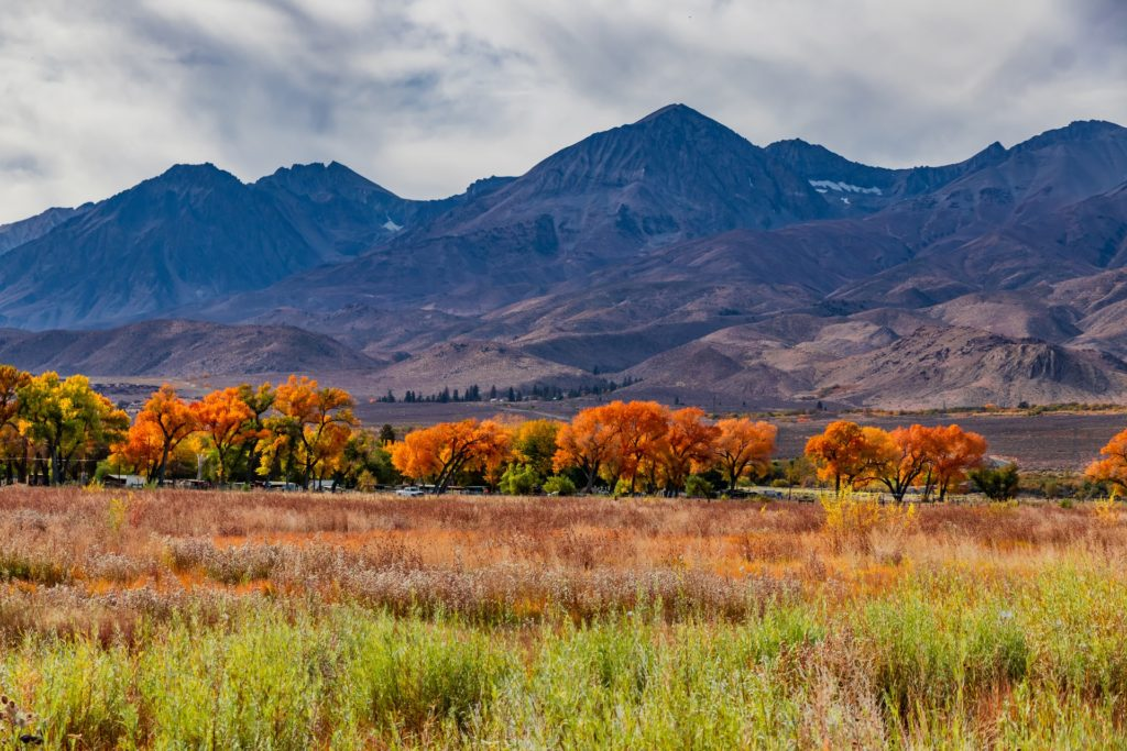 Eastern Sierra Fall Foliage - TravelsWithElle